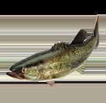 NSwitch_51WorldwideGames_Icons_Fishing.png